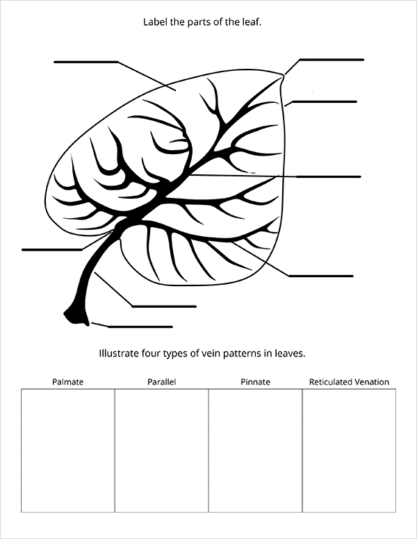 Nature Study with Trees & Leaves